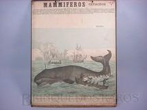 1. Brinquedos antigos - Émile Deyrolle - Cartaz Escolar do Liceu Pasteur Mammiferos Cetaceos Caça à Baleia Impresso na França Década de 1940