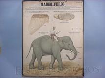 1. Brinquedos antigos - Émile Deyrolle - Cartaz Escolar do Liceu Pasteur Mammiferos Elephante 59,00 por 47,00 cm impresso na França Década de 1940