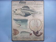 1. Brinquedos antigos - Émile Deyrolle - Cartaz Escolar do Liceu Pasteur Peixes Vertebrados 59,00 por 47,00 cm impresso na França Década de 1940