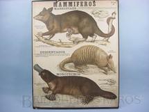 1. Brinquedos antigos - Émile Deyrolle - Cartaz Escolar do Liceu Pasteur Mammiferos Marsupiaes 59,00 por 47,00 cm impresso na França Década de 1940