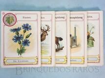 1. Brinquedos antigos - Sem identificação - Jogo Quarteto Flores Animais Brinquedos de Menino Brinquedos de Menina Insetos e Frutas completo com 6 grupos de 8 cartas Década de 1950