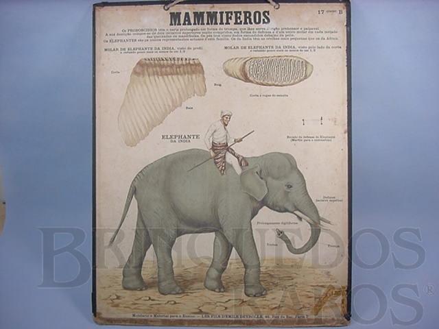 Brinquedo antigo Cartaz Escolar do Liceu Pasteur Mammiferos Elephante 59,00 por 47,00 cm impresso na França Década de 1940