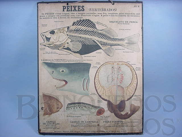 Brinquedo antigo Cartaz Escolar do Liceu Pasteur Peixes Vertebrados 59,00 por 47,00 cm impresso na França Década de 1940