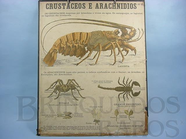 Brinquedo antigo Cartaz Escolar do Liceu Pasteur Crustaceos e Arachnidios 59,00 por 47,00 cm impresso na França Década de 1940